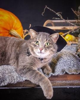 Серая кошка в шляпе лежит на пледе рядом с тыквой