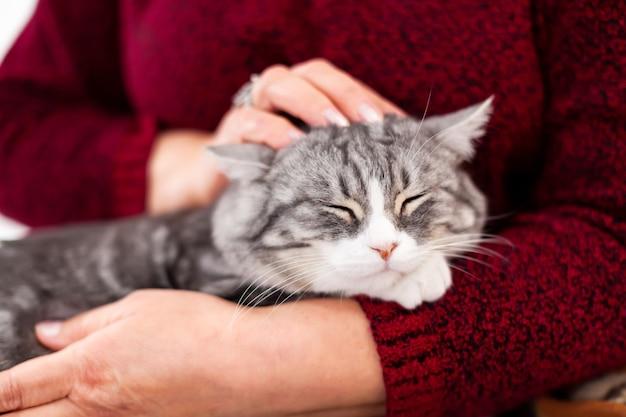 Серая кошка греется на руках у бабушки