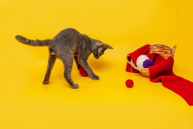 灰色の猫が籐のバスケットの横で遊んでおり、赤いスカーフが伸びており、毛糸のかせは赤くなっています。オレンジ色の背景の正面図。