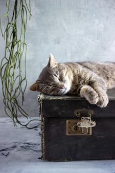 灰色の猫が黒いスーツケースの上に横たわっている