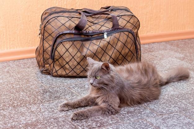 灰色の猫がスーツケースの近くに座っています。駅で電車を待っています。旅行中にスーツケースを持った乗客