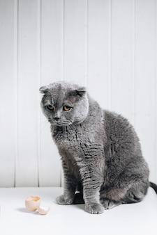 灰色の猫が罪のある視線で座っている