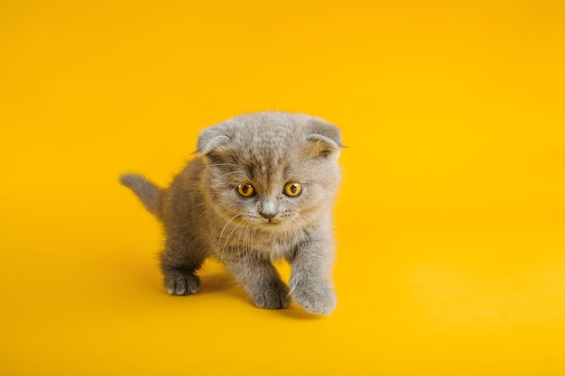 黄色に美しい目を持つ灰色の猫