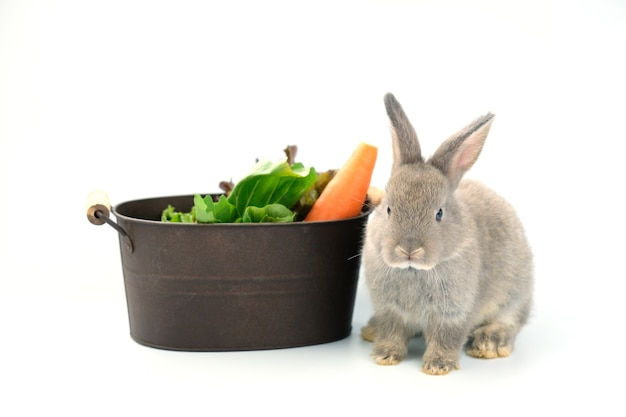 にんじんと緑の野菜が入った鉄のバケツの横に灰色のウサギが座っていました。