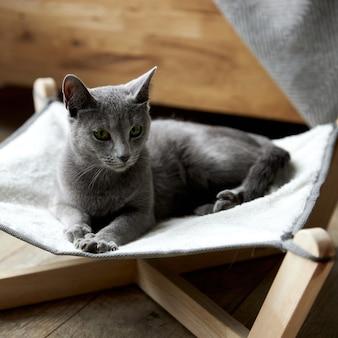 회색 러시안 블루 고양이는 고양이를 위한 특별한 해먹 침대에 누워 있습니다