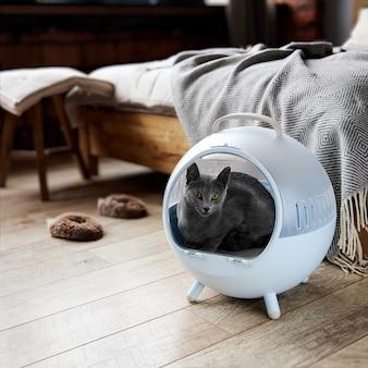 회색 러시아 파란색 고양이는 침실 배경에 대해 고양이를 위한 구형 고양이 침대에 누워 있습니다.