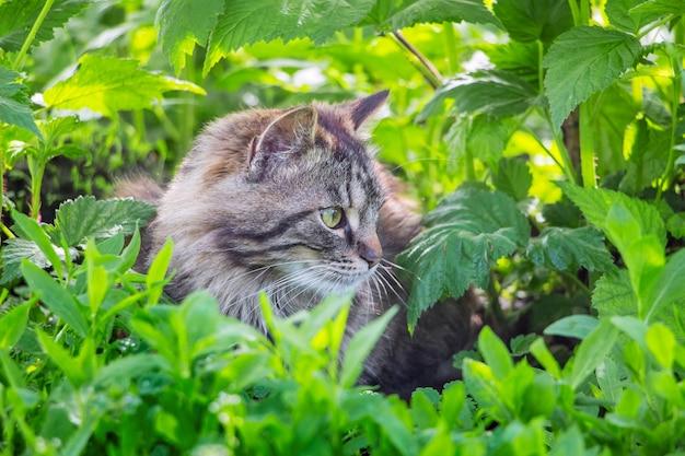 灰色の縞模様の猫が芝生の庭に横たわっています