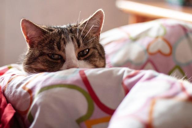 Серая полосатая кошка с белым носом лежит, закутавшись в одеяло, сузив глаза.