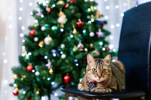 Серый полосатый домашний кот в клетчатом галстуке сидит перед елкой
