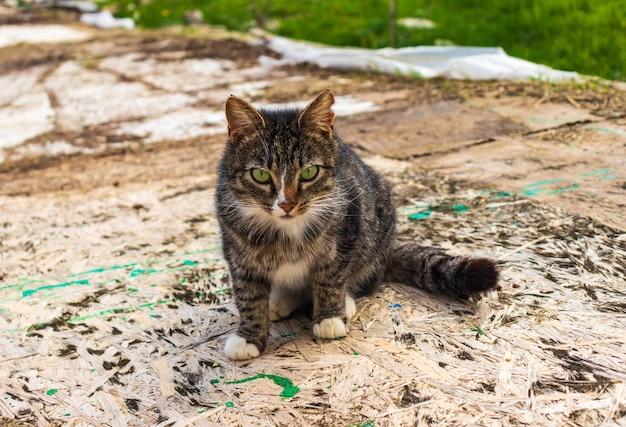灰色のぶち猫が芝生の上に座っています。ゆったりとした美しい野良猫の肖像画。