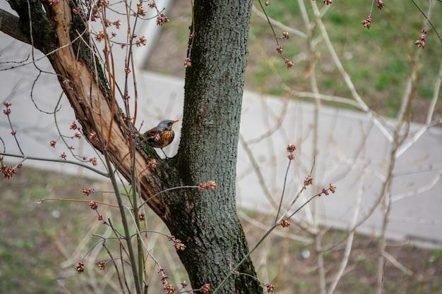 灰色の頭の黒い鳥が木の上に座っている遠くからの眺め