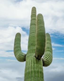 アリゾナ州ツーソン郊外のソノラ砂漠の曇り空の下にある緑のサボテン