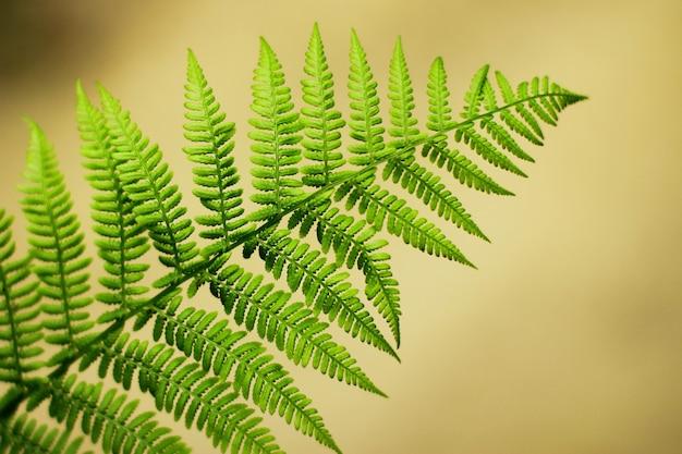 Зеленый лист папоротника в лесу. богатая естественная растительность леса.