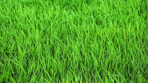 緑の新鮮なハーブの背景
