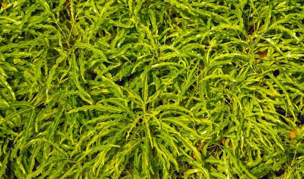 緑の観葉植物は、住宅やオフィスなどの屋内で栽培される植物です。自然な背景。