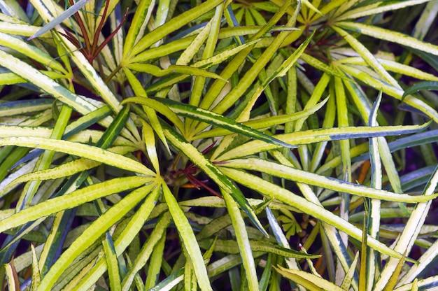 緑の観葉植物は、住宅やオフィスなどの屋内で栽培される植物です。