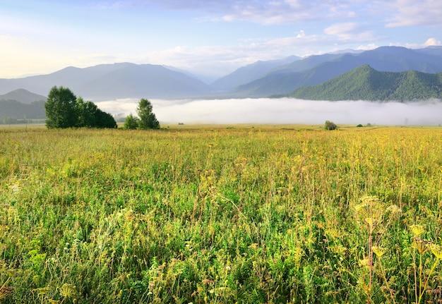 朝の空の下の青い山々を背景にした緑の牧草地。シベリア、ロシア