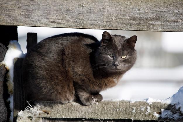 灰色の街頭猫が柵の上に座っています。ホームレスの動物。高品質の写真