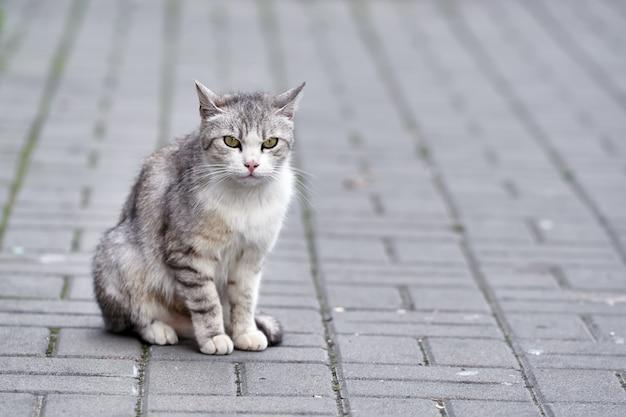 歩道のタイルの上にある通りの灰色の庭の猫。美しい一面を洗い流した
