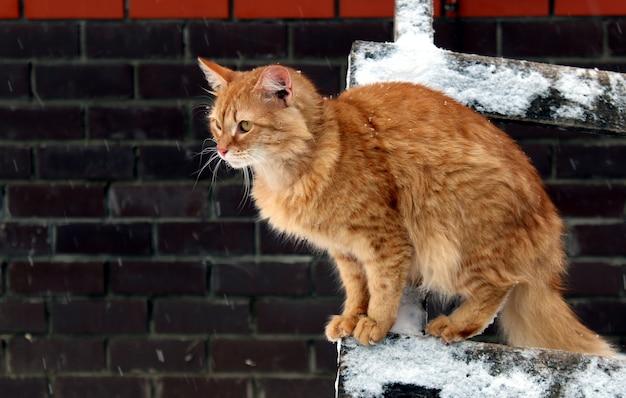 グレンジャー猫が階段に座って、遠くを見ています。