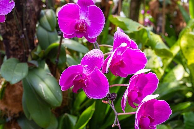 Группа цветущих темно-фиолетовых орхидей.