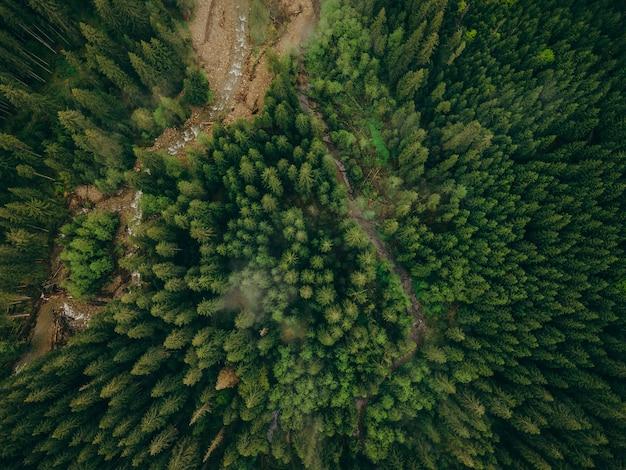 Группа брокколи рядом с деревом