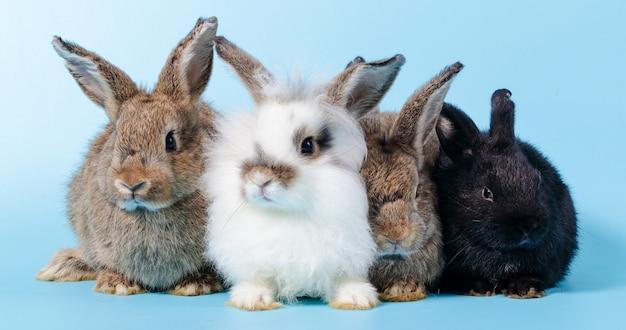 Группа милого кролика на полу