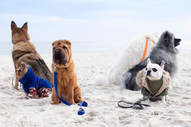 犬のグループは服従に従事しています。ビーチでトレーニングする犬。