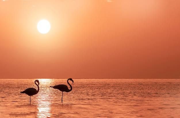 Группа фламинго стоит в лагуне на фоне золотого заката и яркого большого солнца
