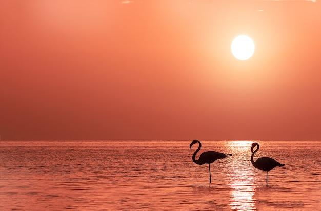 플라밍고 그룹이 황금빛 일몰과 밝은 큰 태양을 배경으로 석호에 서 있습니다.