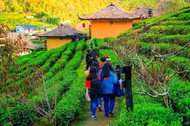 Группа туристов гуляет по чайной плантации после обеда в прекрасный день.