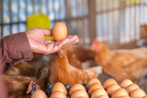 タイの地元の農場で鶏の卵を手に持つ手。