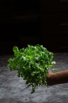 新鮮な緑のコリアンダーを持っている手