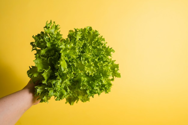 手はテキスト用のスペースと黄色の背景にグリーンサラダのクローズアップを保持しています。