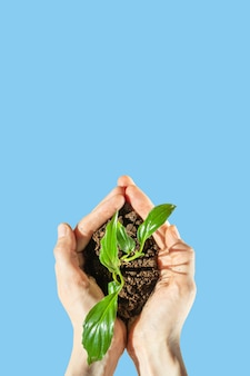 Рука держит росток с земли на голубом фоне. t