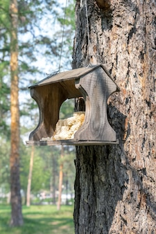Ручная кормушка для диких птиц висит на стволе сосны в парке отдыха