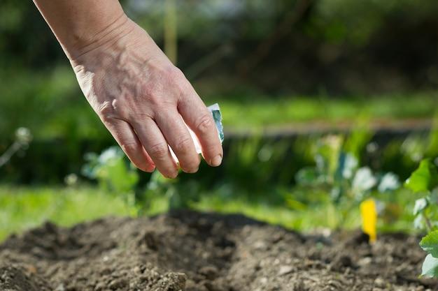 Рука пожилой женщины сажает овощи / фрукты в своем огромном ботаническом саду в прекрасное весенне-летнее время
