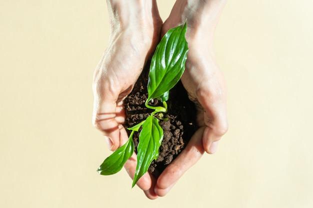 Руки держит росток с земли на светлом фоне пастель.