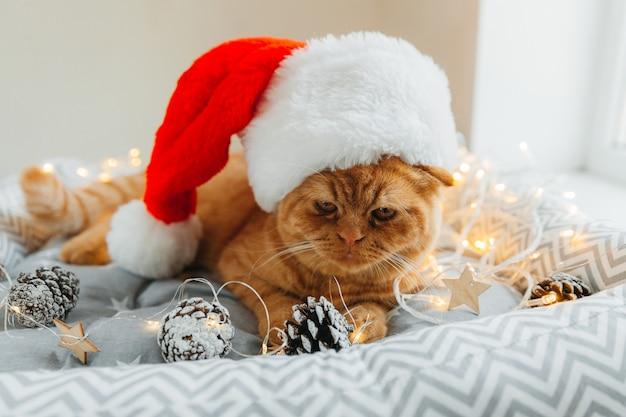 Счастливый рыжий кот в новогодней шапке лежит в своей постели с новогодними огоньками. рождество.