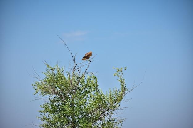 野原の木に座っているタカ