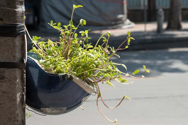 식물 화분으로 재활용하는 헬멧