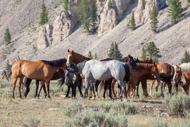 Табун лошадей на осеннем лугу