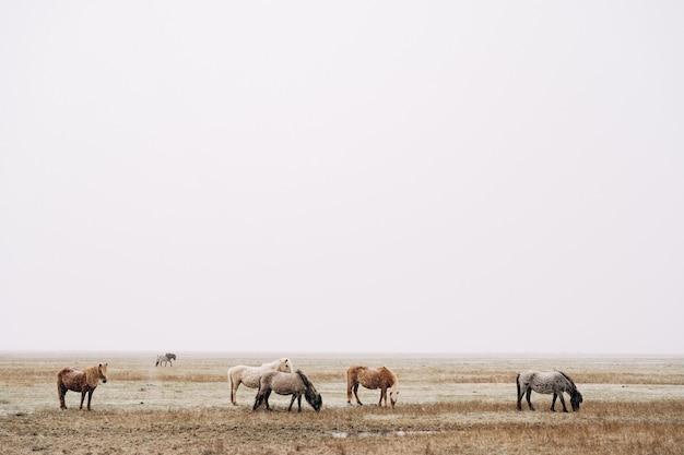 馬の群れが野原を歩いていて、草を食べているため、視界が悪く雪が降っています。