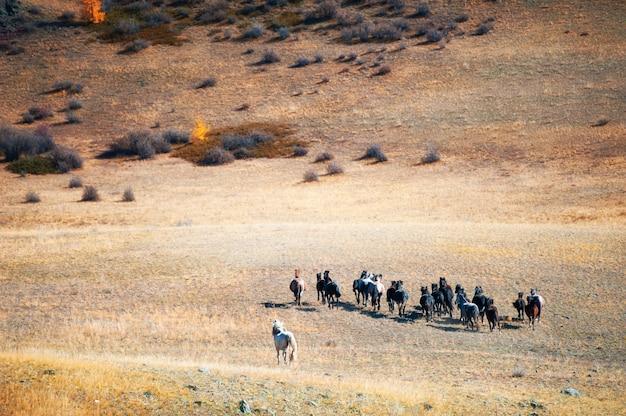 山を走る馬の群れ。アルタイ共和国、シベリア、ロシア