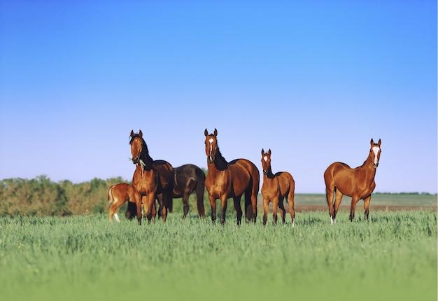 Табун молодых лошадей красив на солнечном лугу с высокой травой.