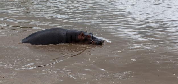 하마는 호수의 물에 앉아