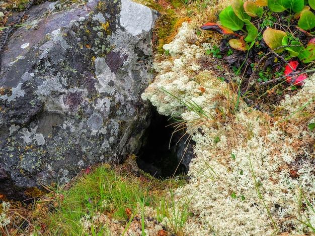Яма между мхом и камнем в лесу весной. лесная сцена обрамлена дырой на полу тропического леса.