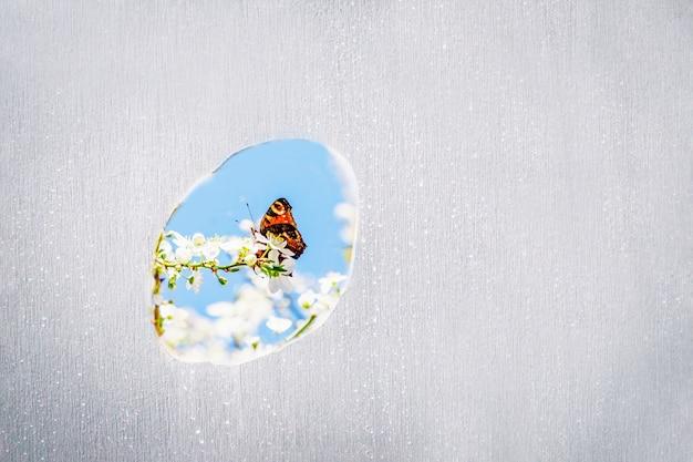 春の花とオレンジ色の蝶と灰色のコンクリートの壁の穴
