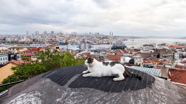 Бездомный кот с белым и коричневым мехом на корме с видом на стамбул, стамбул