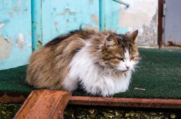 아픈 눈을 가진 노숙자 솜털 다색 고양이가 거리에 누워 있습니다.